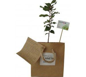 Planta de escritorio